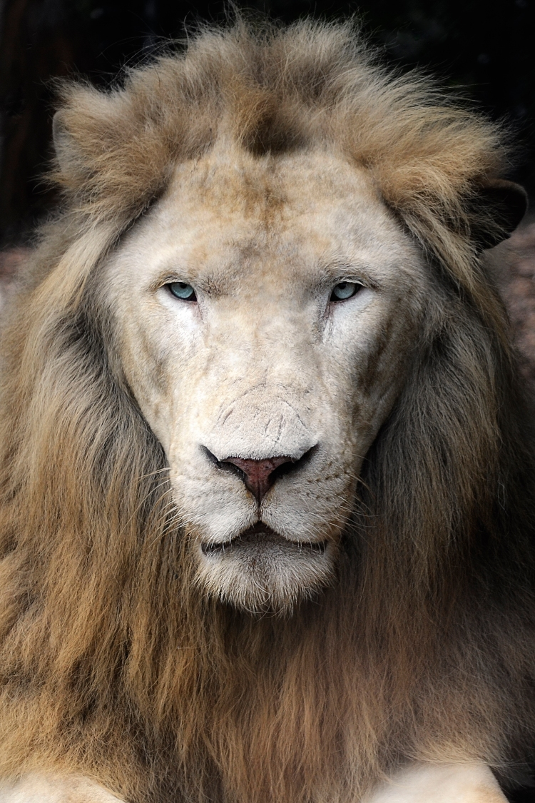 The great King