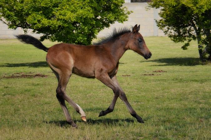 Malik Foal