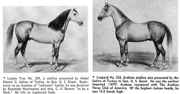 abd-arap-atlari