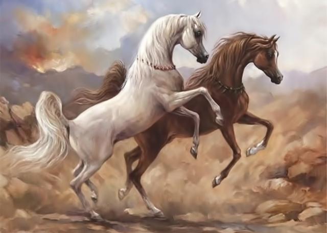 Arabian horses in Desert