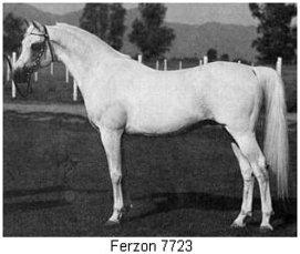 ferzon7723