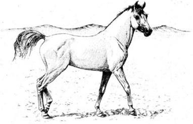 hamdany