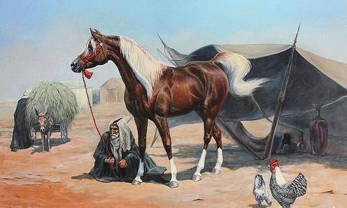 Arabian horse on tend 1