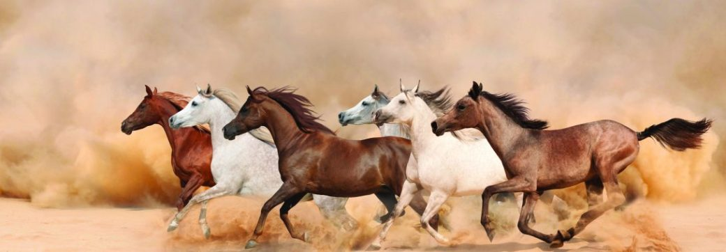arabianhorse-1090x380
