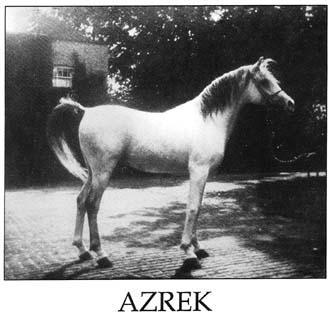 Azrek300