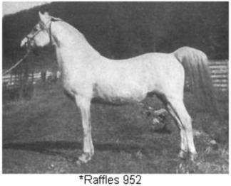 Raffles952--side